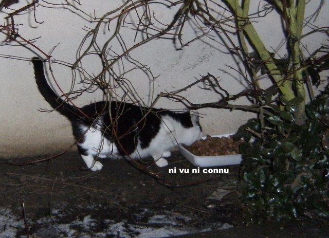Distribution de nourriture chats errants